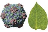 Mother Nature's Nanoengineering