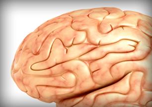 Photo: A human brain