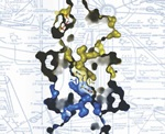 PKM2 enzyme