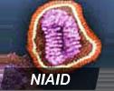 NIAID