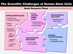 Thumbnail for The Scientific Challenges of Human Stem Cells. Click the image for a text description and to download the full-size image.