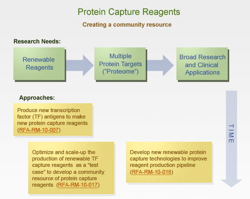 Protein Capture Reagents