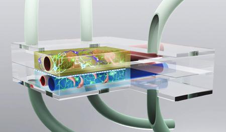 Artist's conception of the microbrain bioreactor.