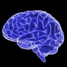3d wireframe rendering of human brain.