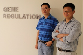 Yanming Wang and Gong Chen