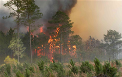 Lake City, Fla., 15 de mayo, 2007 – El incendio Bugaboo de la Florida