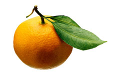 Photograph of an orange