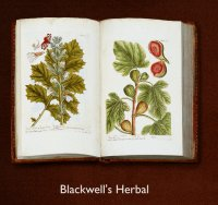Blackwell's Herbal open book displaying her plant drawings