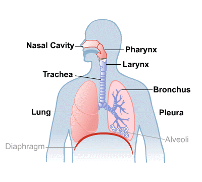 Body Map for Lungs and Breathing