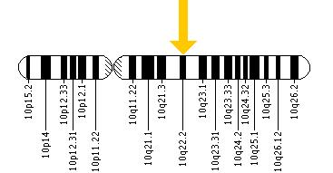 The KAT6B gene is located on the long (q) arm of chromosome 10 at position 22.2.