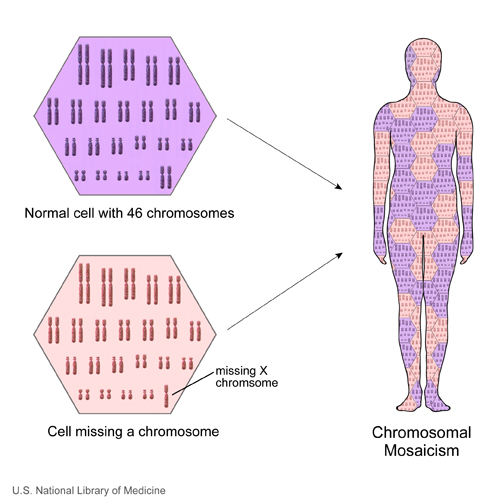 When an individual has two or more cell populations with a different chromosomal makeup, this situation is called chromosomal mosaicism.