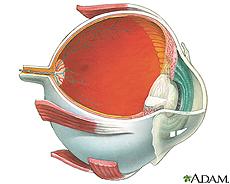 Illustration of internal eye anatomy