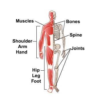 Body Map for Bones, Joints and Muscles