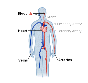 Body Map for Blood, Heart and Circulation