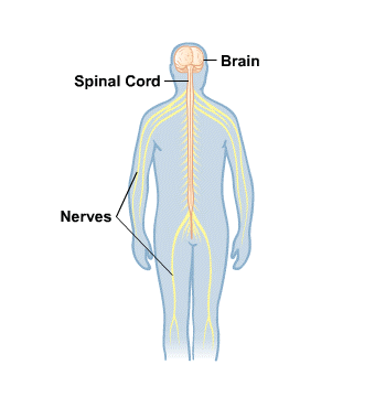 Body Map for Brain and Nerves
