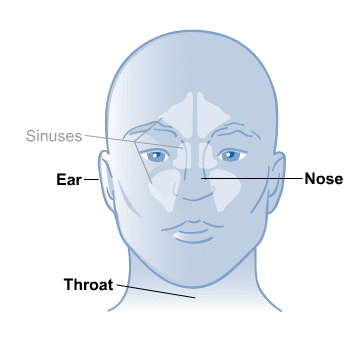 Body Map for Ear, Nose and Throat