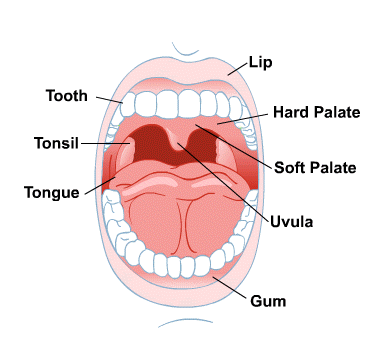 Body Map for Mouth and Teeth