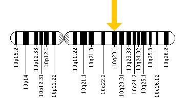 The KLLN gene is located on the long (q) arm of chromosome 10 at position 23.