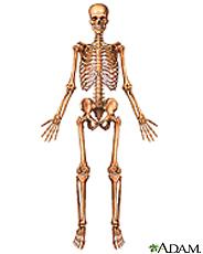 Illustration of the skeleton