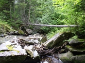 stream mostly blocked by rocks and fallen branches