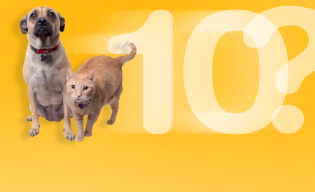 10 Questions to Ask Your Vet - topic feature graphic