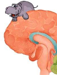 foto del con hipopótamo