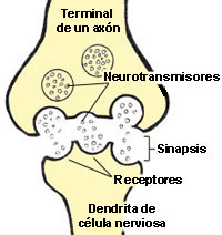 illustration shows neurotransmitters communicating over a synapse
