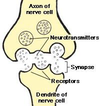 Una célula nerviosa