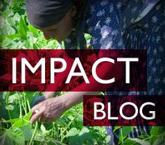 Impact Blog