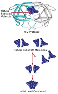 Some anti-HIV drugs were developed using structure-based drug design. Knowing that HIV protease has two symmetrical halves, pharmaceutical researchers initially attempted to block the enzyme with symmetrical small molecules. They made these by chopping in half molecules of the natural substrate, then making a new molecule by fusing together two identical halves of the natural substrate.