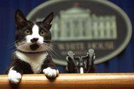 Socks, the Clinton's cat