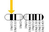 The RNASEH2A gene is located on the short (p) arm of chromosome 19 at position 13.2.