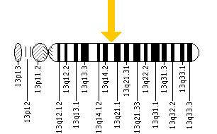 The RNASEH2B gene is located on the long (q) arm of chromosome 13 at position 14.3.