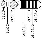 Ideogram of chromosome 21