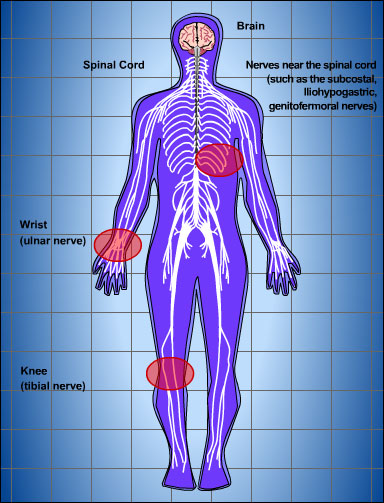 The brain and spinal cord make up the central nervous system.. It is through the spinal cord that information flows from these nerves to the brain and back again.