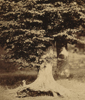 Image: Gustave Le Gray, Forest of Fontainebleau, c. 1856 Patrons' Permanent Fund 1995.36.93